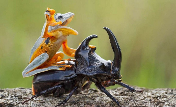"""""""Передайте за проезд!"""", - самые наглые пассажиры из мира животных"""