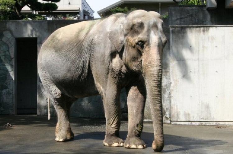 20 самых старых животных в мире и одно бессмертное существо