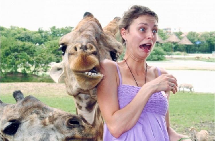 Смешные селфи, героями которых стали животные, 60 фото