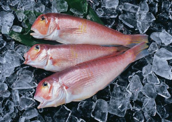 Рыба рыбе рознь: сорта рыбы, которые нельзя употреблять