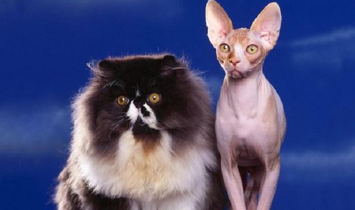 30 очаровательных фото пушистых котиков