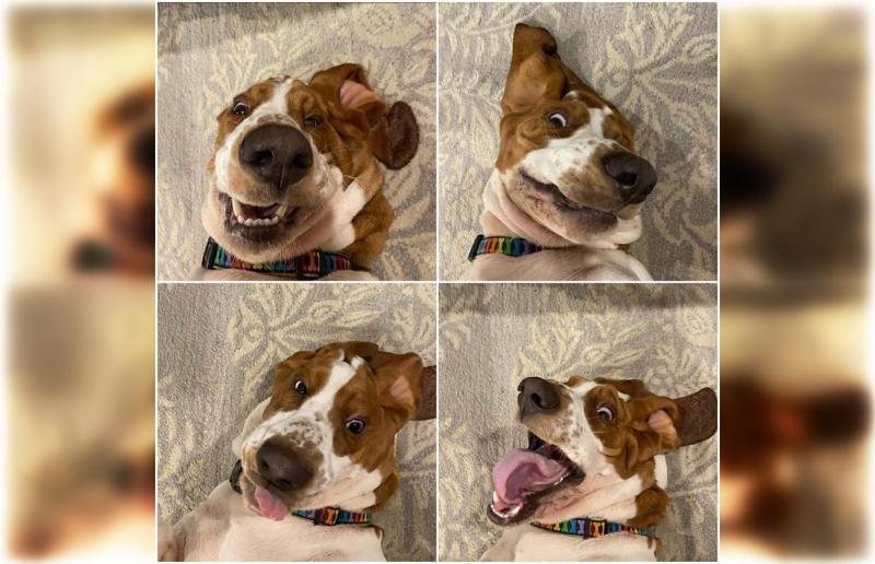 Самые смешные животные в мире, 30 фото