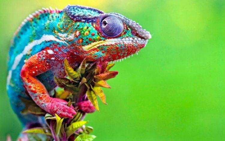 smeshnyye foto obitateli dikoy prirody