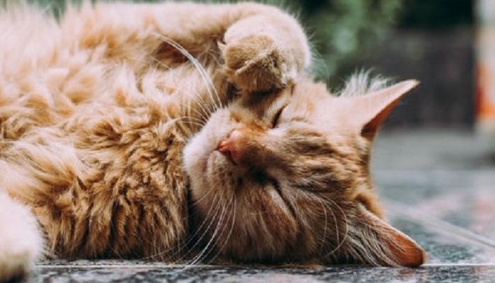 Очень фотогеничные котики, 45 фото