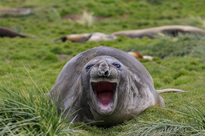 Самые забавные животные: 50 свежих фотографий