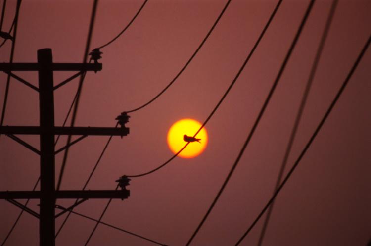Может ли погибнуть птица, севшая на линии электропередач?