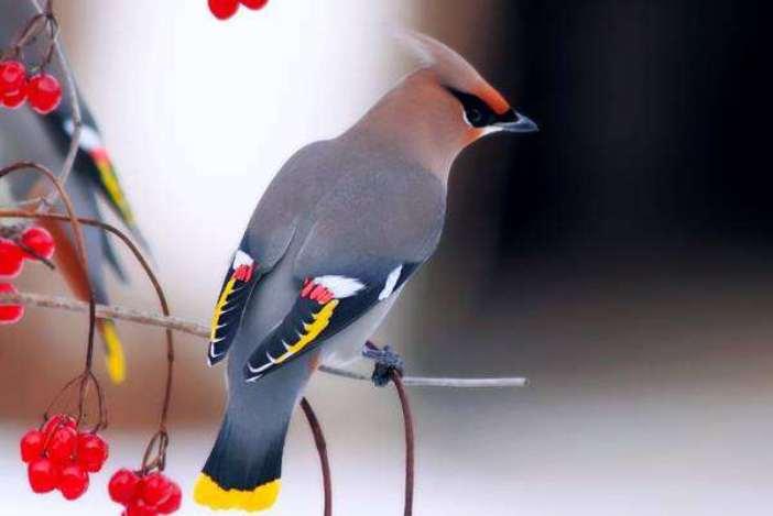 40 фото птиц невероятной красоты