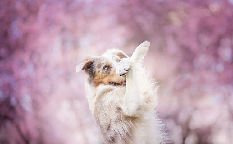 Растопят любое сердце: 50 невероятно красивых фото собак