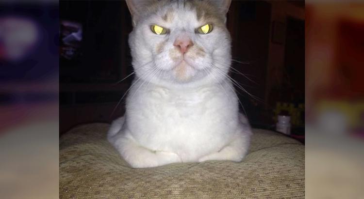 40 доказательств того, что коты не всегда бывают милыми