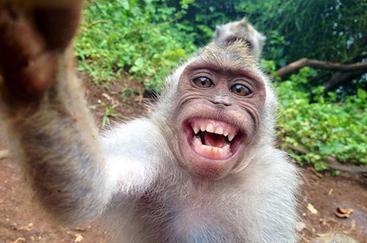 Смешные селфи, героями которых стали животные, 40 фото