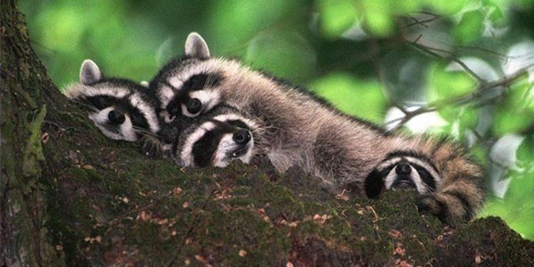 спящие животные