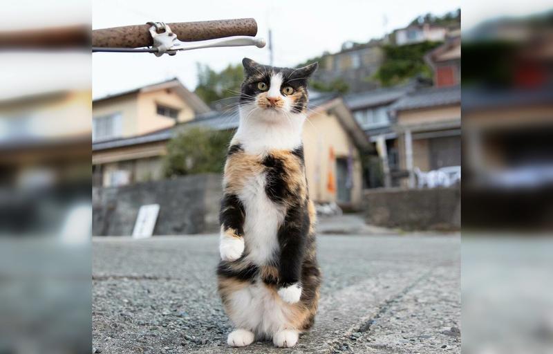уличные японские коты