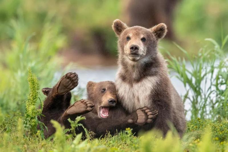 50 фото животных, которые вы обязаны увидеть