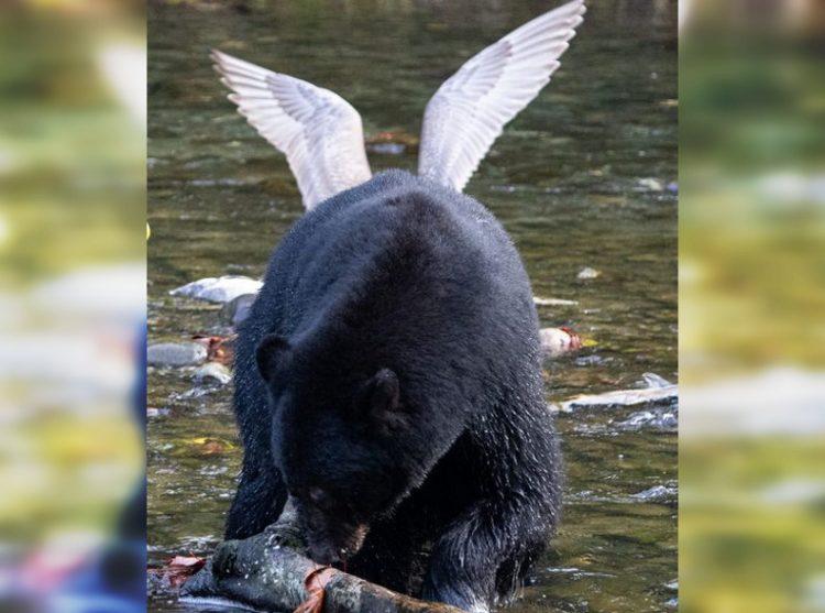 Забавные фото животных, которые очень эффектно появились в кадре