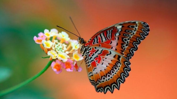 30 чудесных фото, которые подарят эстетическое наслаждение