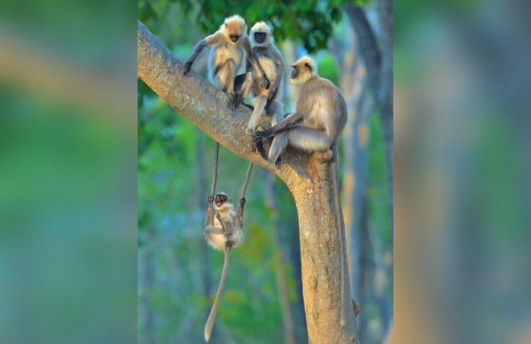 Забавные представители дикой природы, попавшие в кадр